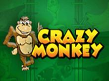Игровой автомат Вулкан Crazy Monkey
