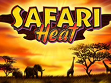 Автомат онлайн Safari Heat в Вулкан клубе